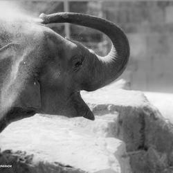 Happy olifant