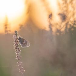 Klein hooibeestje