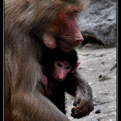 Veilig in moeders armen