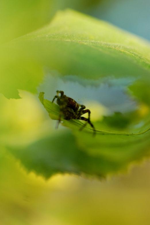 Spin in het groen