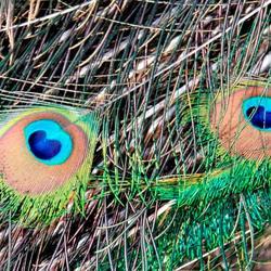 2 ogen