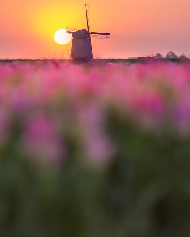 Hollandse Ochtend - Normaal word mijn oog altijd getrokken door de lijnen in een bollenveld. Dit keer ben ik eens anders gaan fotograferen. En heb de