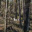 Kroondomein Niersen 05-03-2021 072