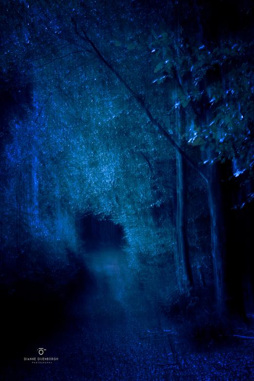 Forest of the dark... - Inmiddels heb ik veel herfstfoto&#039;s gemaakt, voor mij de uitdaging om er<br /> lekker mee aan de slag te gaan zodat ik er