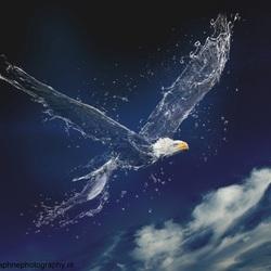 Storm or no storm, the eagle eats fish