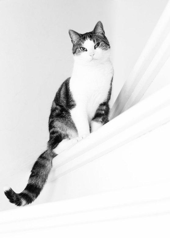 """Sammy de kat - Het idee was om Sammy op een witte achtergrond te fotograferen, met flits op standaard met paraplu. Aardig gelukt <img  src=""""/images/sm"""