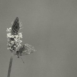 bloem met vlinder