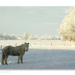 Winterpaardje