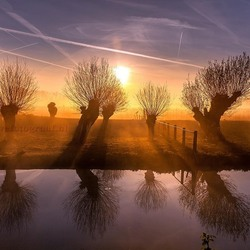 Foggy Willows......