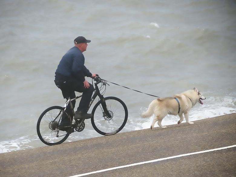 who let the dog out  - altijd weer de vraag ,wie laat wie nu uit