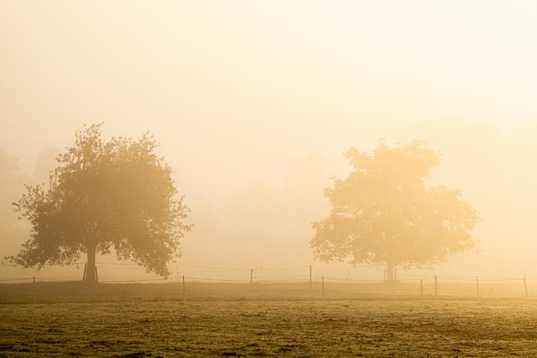 double tree - zo mooi was het licht op een vroeg morgen, deze week