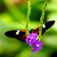 vlinder op schommel
