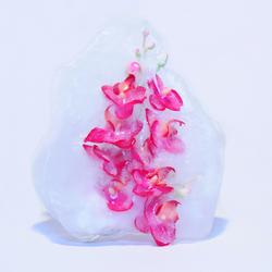 Iceflower
