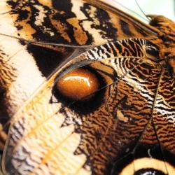 Vlinder in Artis