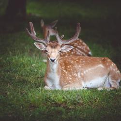 Buck :)