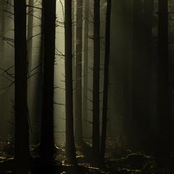Het Haagse Bos