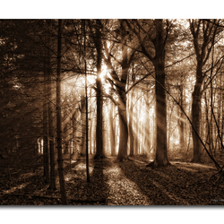Light in the forest!!