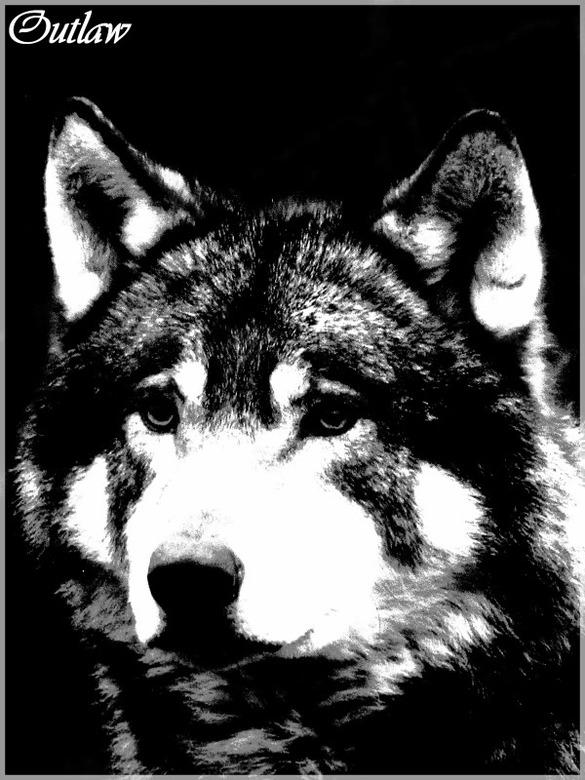 OUTLAW - Even een foto bewerkt (voor het eerst op ZOOM.NL) van een wolf...