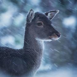 Snowfall beauty