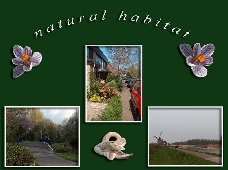 Natural Habitat - Natural Habitat.<br /> Dit is de natuurlijke leefomgeving van Homo Sapiëns Joke(us). De foto's zijn allemaal gemaakt bij of op onge