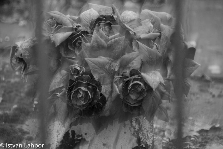 Roses?! - Uitgebloeide neprozen op een graf