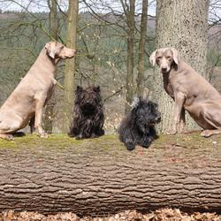 4 op een rij in het Sauerland