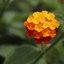 Gele bloemetjes