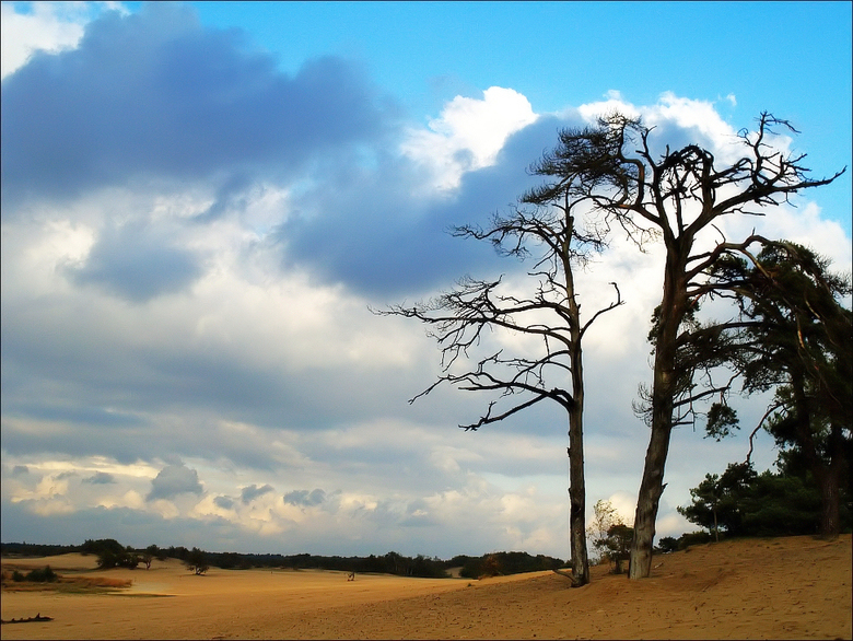 Zand en bomen - Hier een foto vanaf de Loonse en Dunense duinen. Misschien niet de meest orginele compositie maar door de lucht en het najaarslicht vi