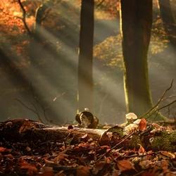 Magie in het Speulderbos