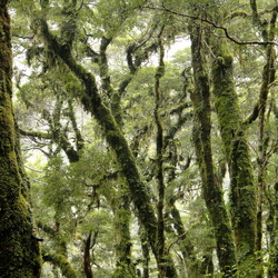 Nieuw Zeeland - Sprookjesbos