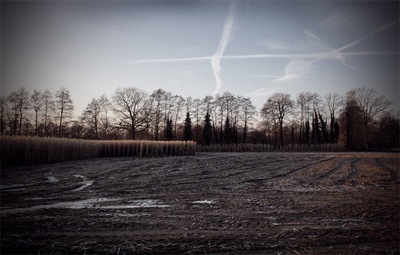 Cold Day - Ik moest en zou vanochtend (ondanks tijdgebrek) een foto maken van het kouige landschap. Volgens ademt deze bewerking de kou van vandaag...