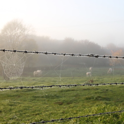 spinneweb in mist