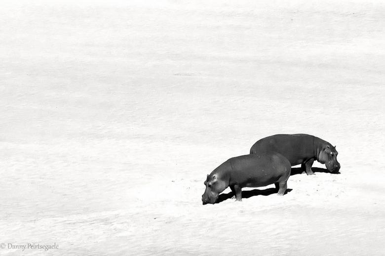 alone together - Genomen op safari in Zuid afrika.
