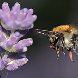 Honing in zicht