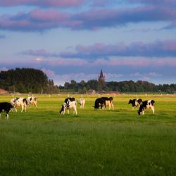 Weilanden bij Nes ad Amstel