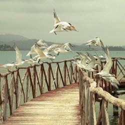 San Blas vogels