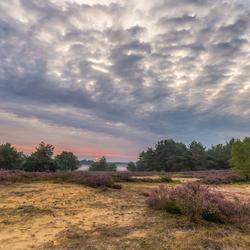 De Ginkelse Heide