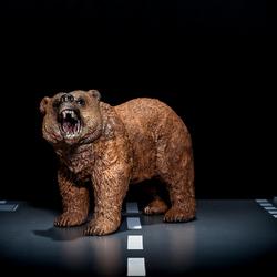 Beren op de weg zien