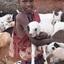 Masaï herder