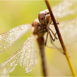 Up close and Personal