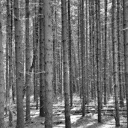 de  bossen in Twente