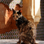 Kat in de Kasbah