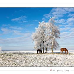 Last winterlook