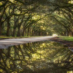 Reflecting Oak Alley