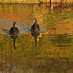 De zwarte zwanen bij de Menkemaborg