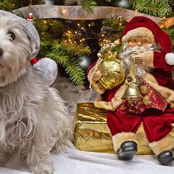iedereen een prettige kerstavond!!