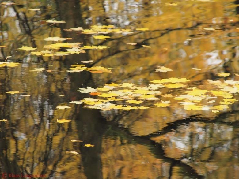 Herfst bladeren  in het water - Herfst bladeren in het water