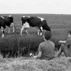 Kinderen en koeien in de natuur