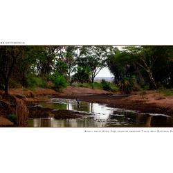 Tsavo West NP, Kenia