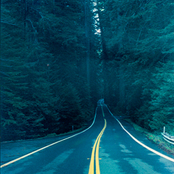 Redwood forest road
